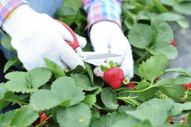 Плодовая гниль – фото, описание и меры борьбы