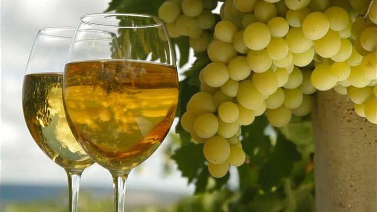 Мускатные сорта винограда