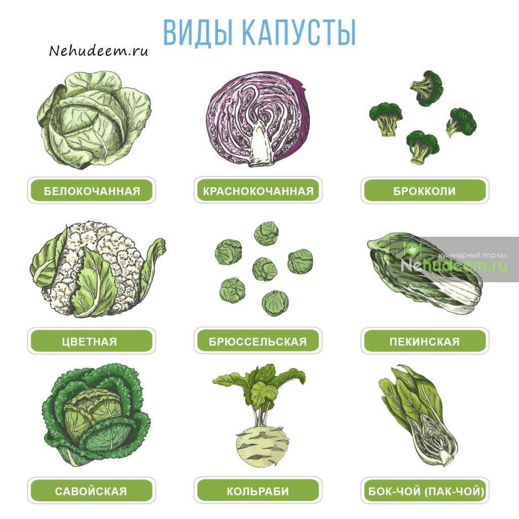 Лучшие сорта и гибриды цветной капусты – фото и описания