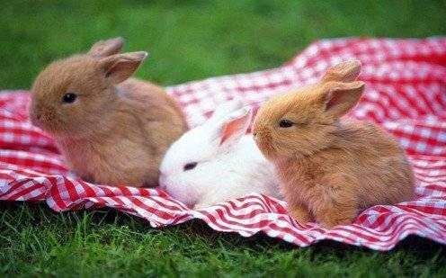 О болезнях кроликов: виды заболеваний, описание симптомов и их лечение