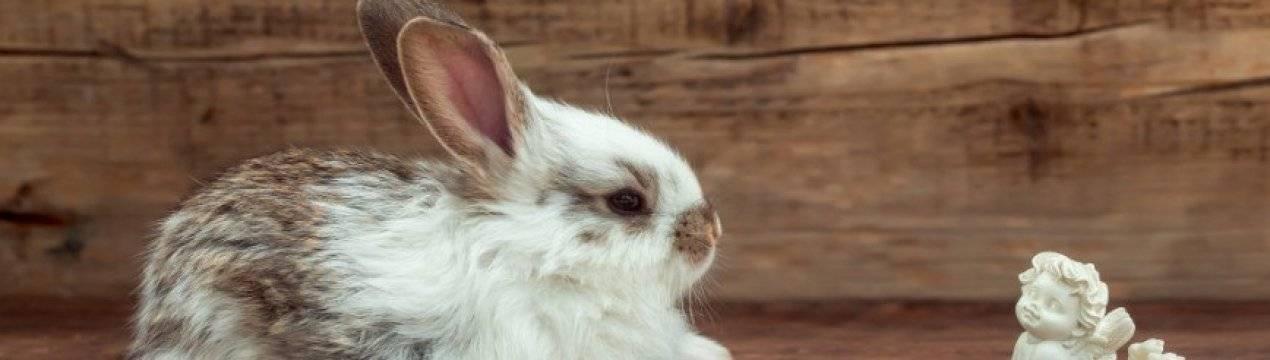 Лечение паралича у кролей