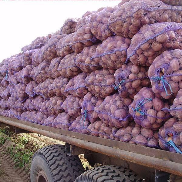 Джувел сорт картофеля. история происхождения сорта картофеля «джувел»