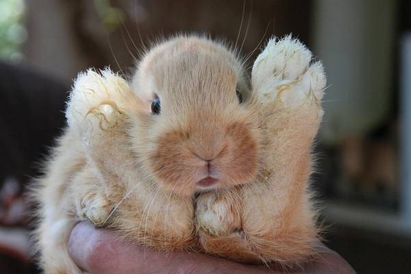 Причины и лечение поноса у кроликов