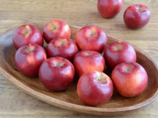 Яблоня. зимние сорта