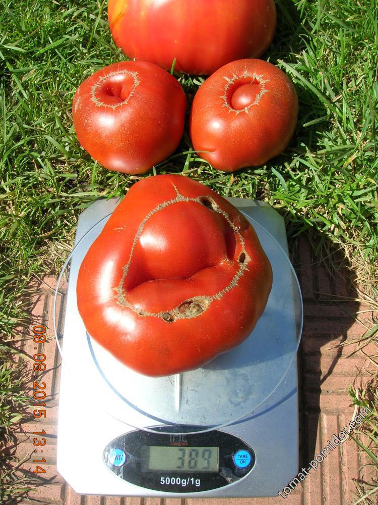 Томат арбуз: описание сорта, отзывы, фото, урожайность | tomatland.ru