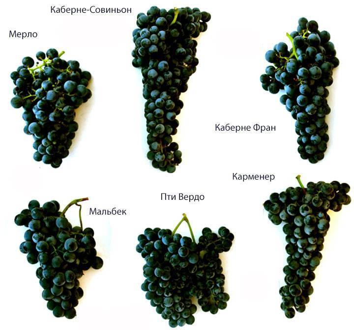 Из какого винограда делают белое вино, красное вино - лучшие сорта