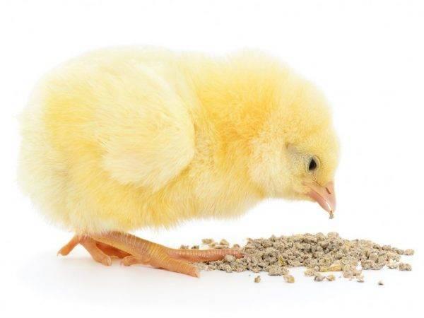Чем кормить двухмесячных цыплят
