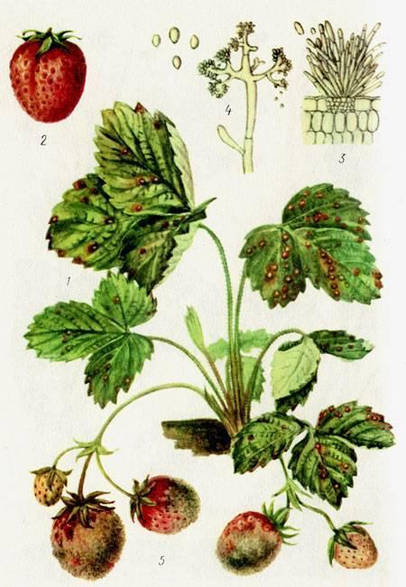 Все, как у людей: какие лекарства помогут растениям в саду и огороде?