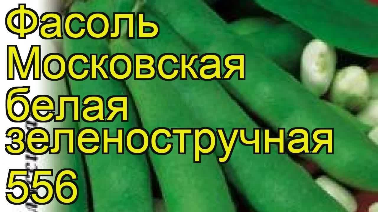 Лимская фасоль