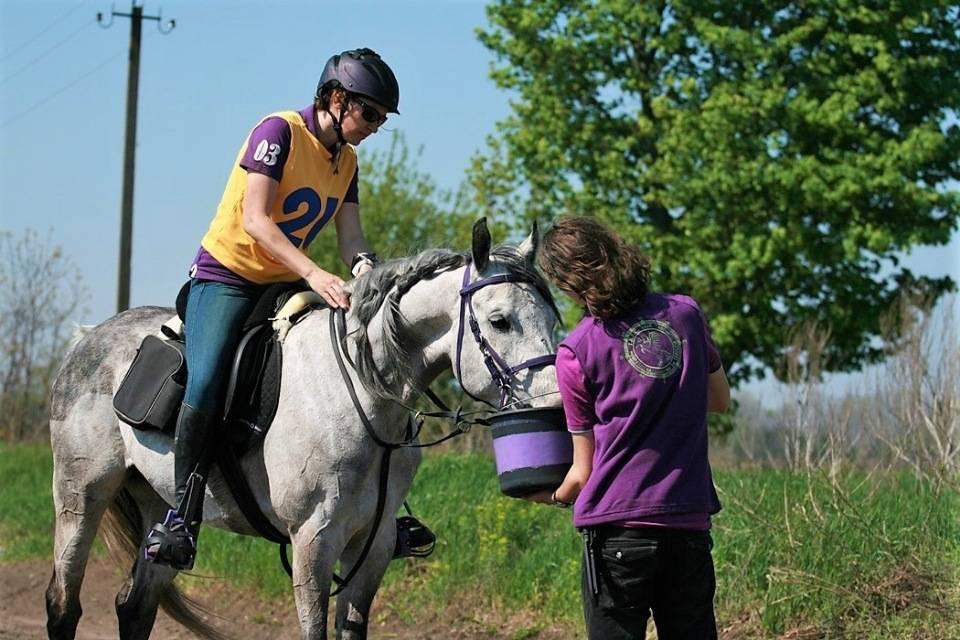 Как в домашних условиях ухаживать за лошадью для начинающих