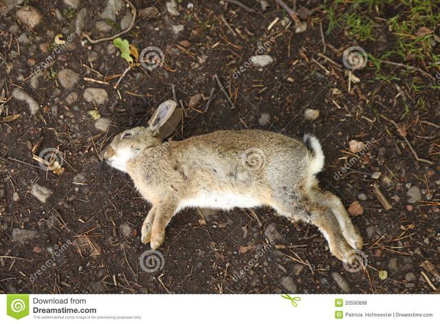 Почему умирают кролики? причины гибели кроликов и способы их решения начали умирать кролики что делать