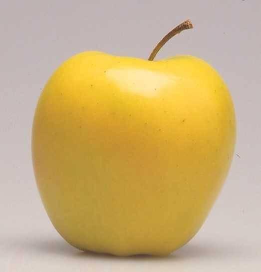 Яблоня семеренко: описание сорта, фото, отзывы