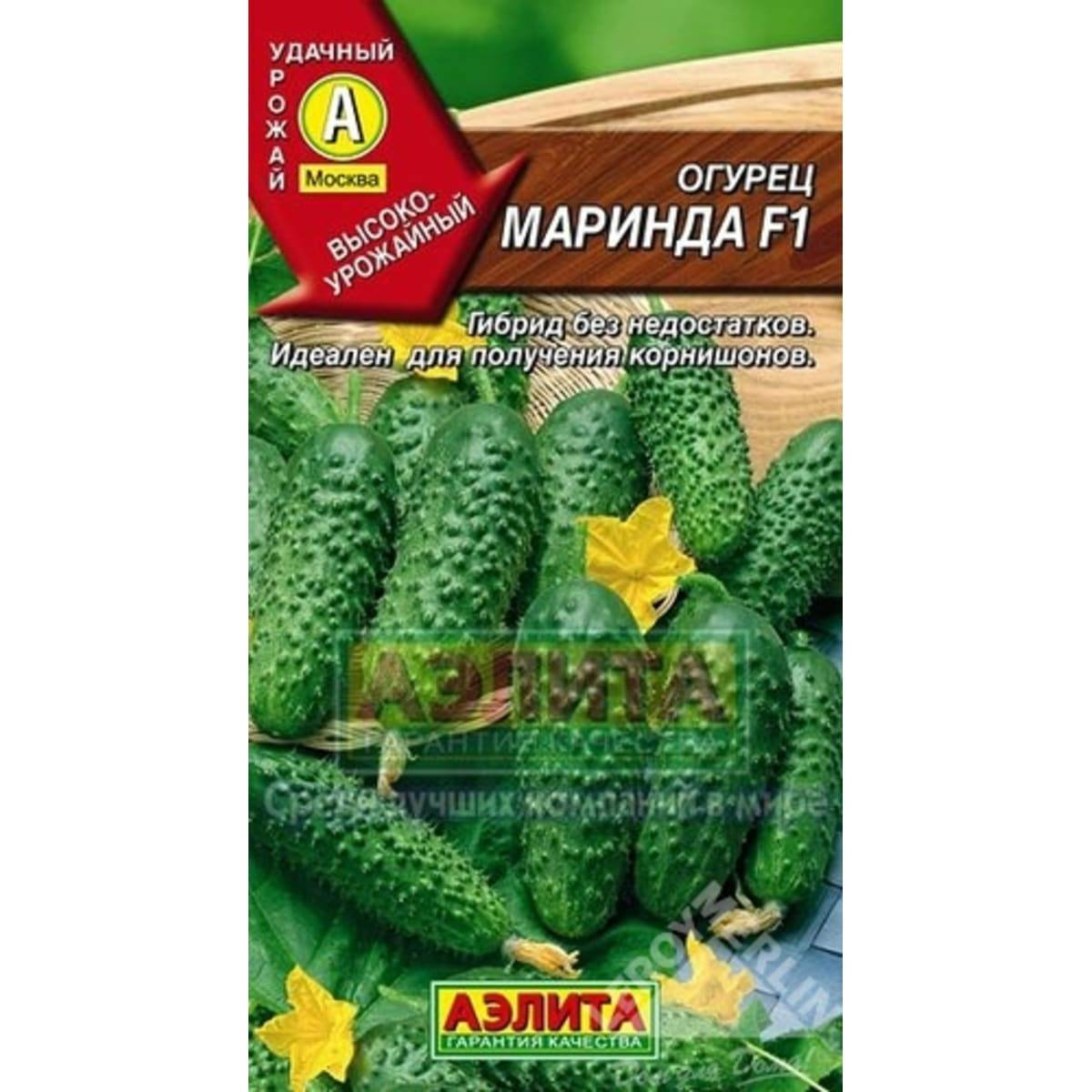 Маринда f1 — огурец с высокой урожайностью