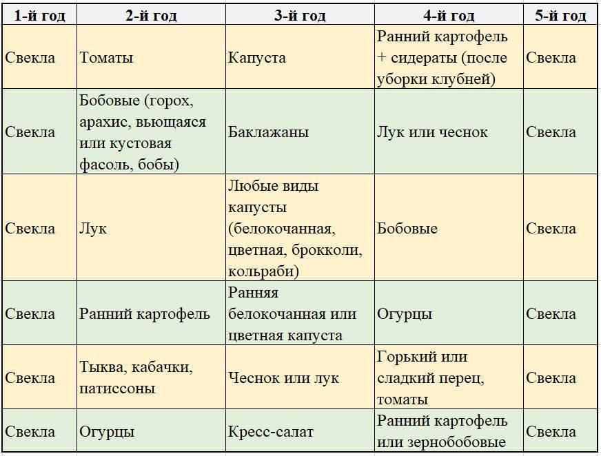 Что можно сажать после баклажанов на следующий год: таблица культур