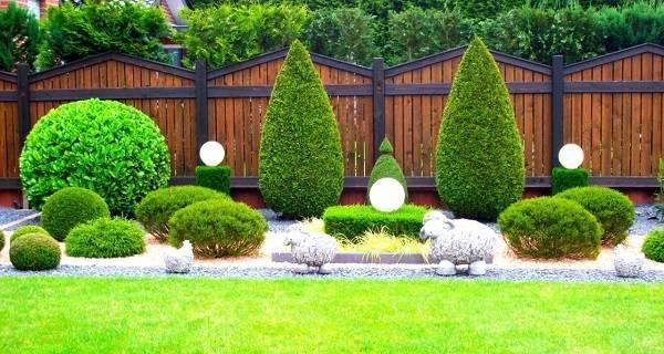 Когда и как посадить тую – пошаговое описание лучшей технологии