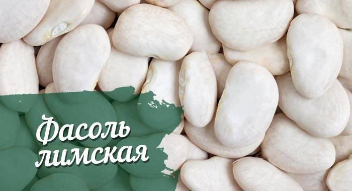 Лимская фасоль: польза и вред, пищевая ценность, состав, противопоказания