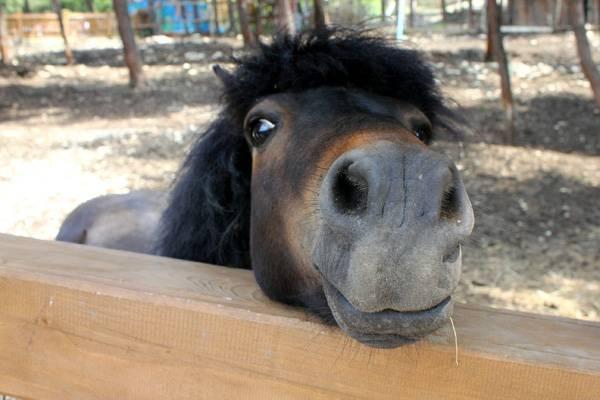 Новые методы диагностики и лечения болезней лошадей