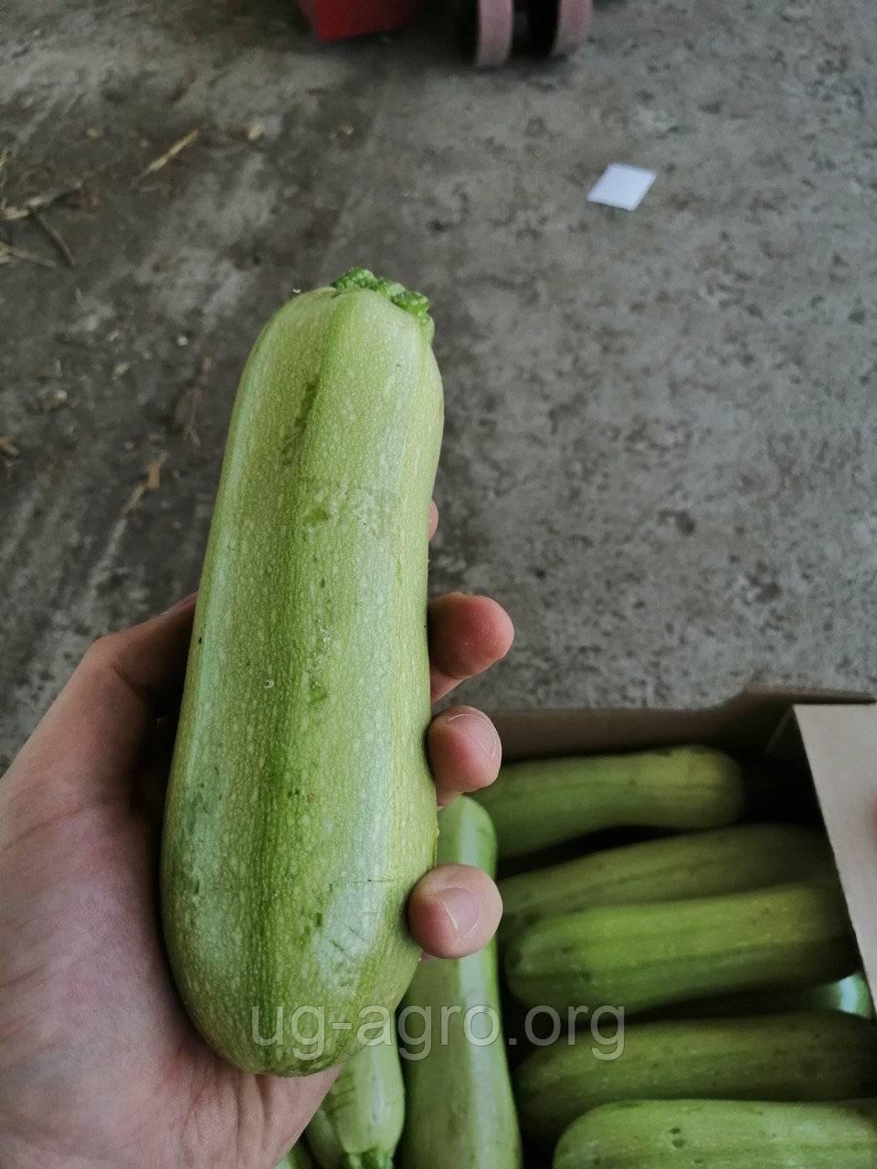 Как проверить семена на всхожесть: лучшие методы