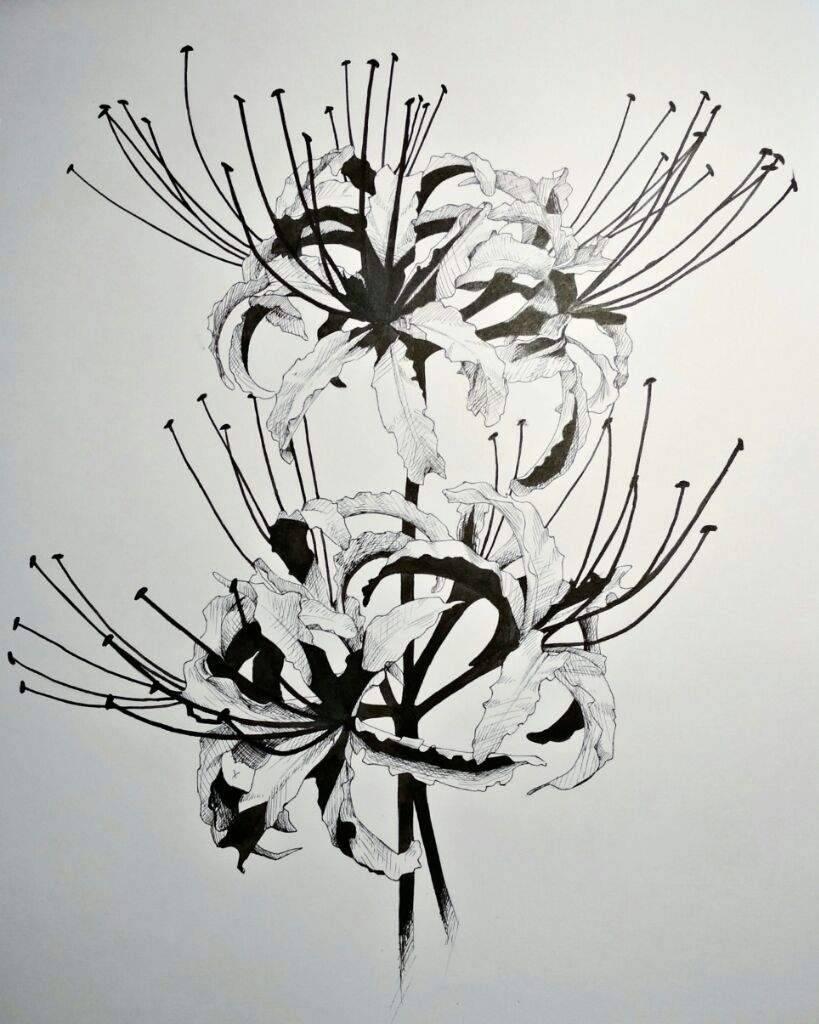 Лилия  – виды, посадка, выращивание и уход