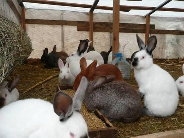Разведение кроликов в яме своими руками