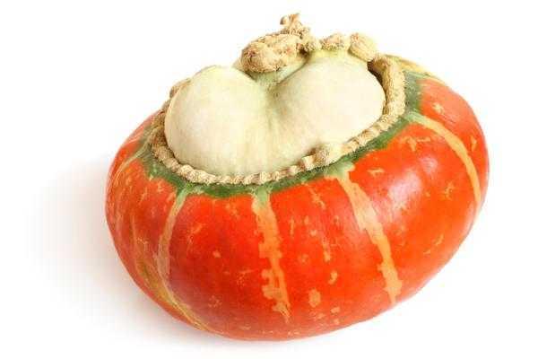 Декоративные тыквы: посадка, уход и размножение