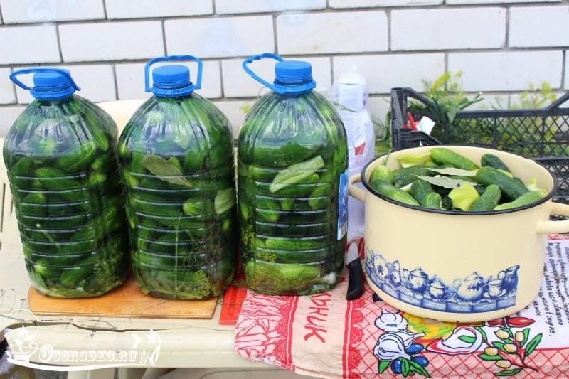 Посадка огурцов в 5 литровых бутылках. видео