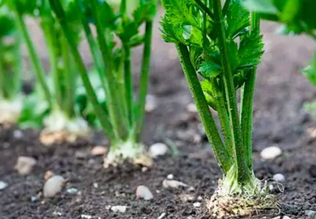 Посев овощей в открытый грунт в марте: схема, сроки, уход за посевами