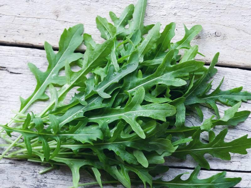 Род taraxacum галерея видов