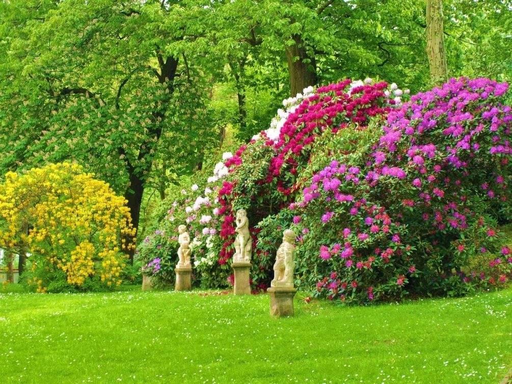 Все о тенелюбивых плодовых деревьях и кустарниках: какие деревья любят тень