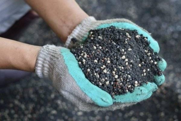 Как удобрять плодовые кустарники?