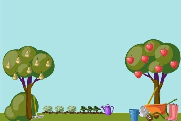 Как посадить рядом яблоню вишню и сливу