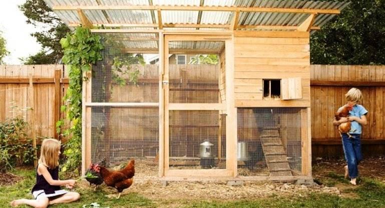 Вольер для кур: для чего необходим и как его оборудовать
