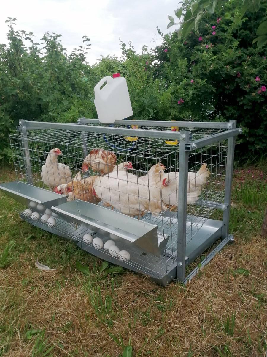 Самодельные клетки с яйцесборником для кур-несушек