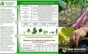 Удобрение карбамид: применение в огороде, в саду. карбамид: применение для огурцов