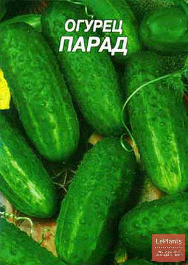 Об огурце Парад: описание сорта, характеристики, технология выращивания