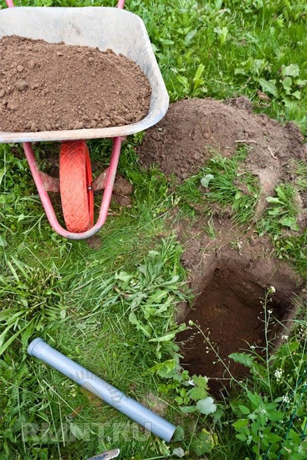 Садоводу - совместимость растений, их чередование на садовом участке