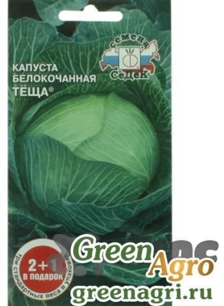 Капуста белокочанная: все тонкости выращивания и ухода