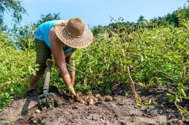 Сонник трактором копать картошку. к чему снится трактором копать картошку видеть во сне - сонник дома солнца