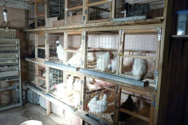 Строим курятник для 10–15 куриц своими руками