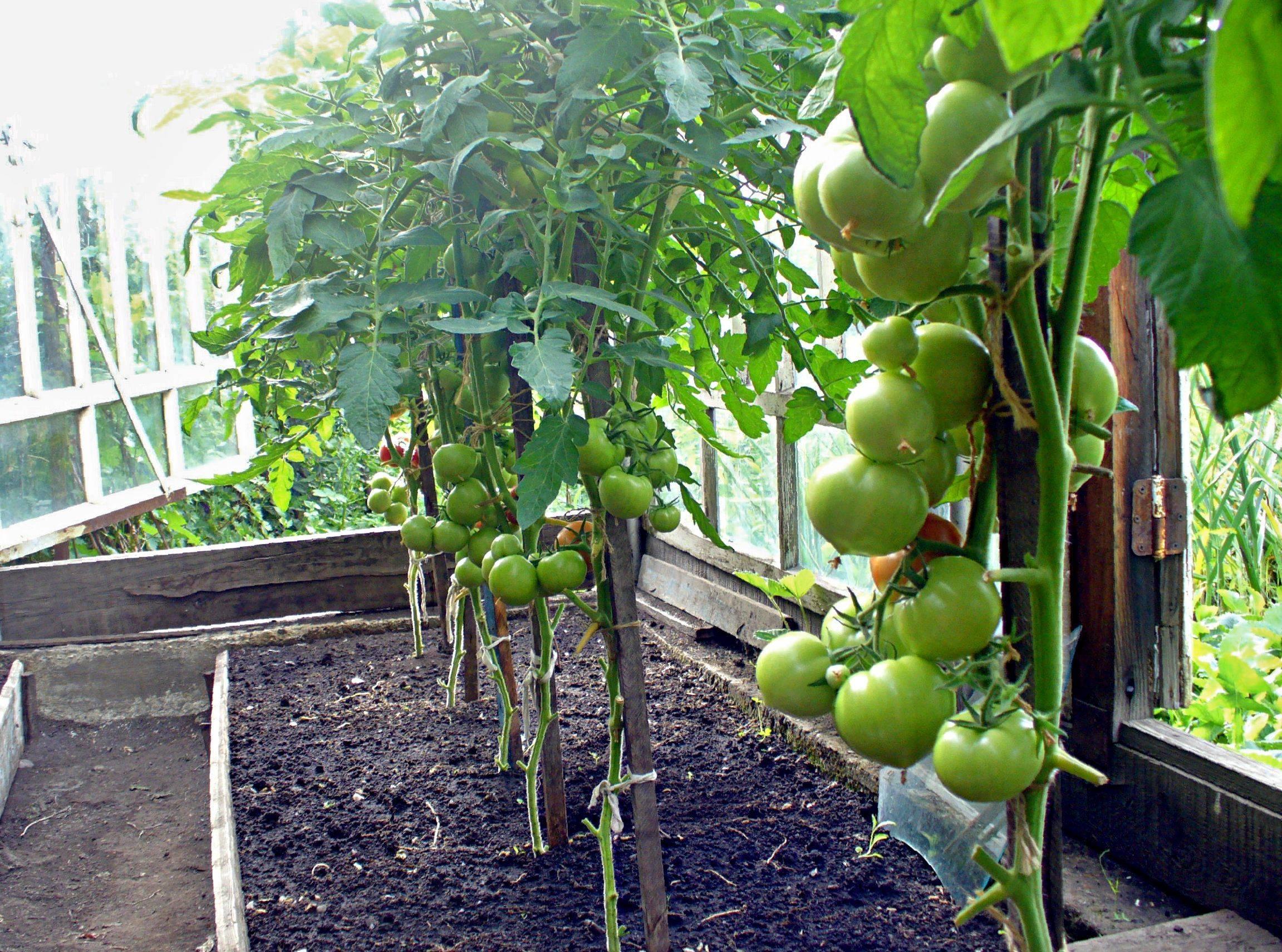 Таблица совместимости овощей и трав на грядке