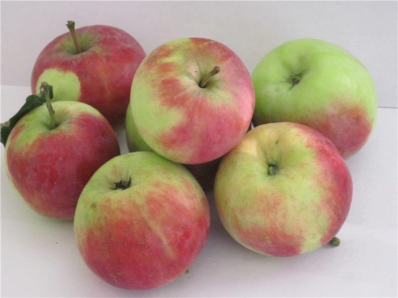 Сорт яблони бессемянка мичуринская: описание и подробная характеристика, правила выращивания
