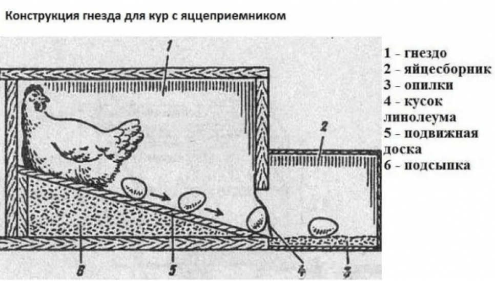 Гнезда для кур-несушек с яйцесборником - подробная инструкция по изготовлению