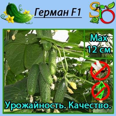 Лучшие сорта овощей для сибири