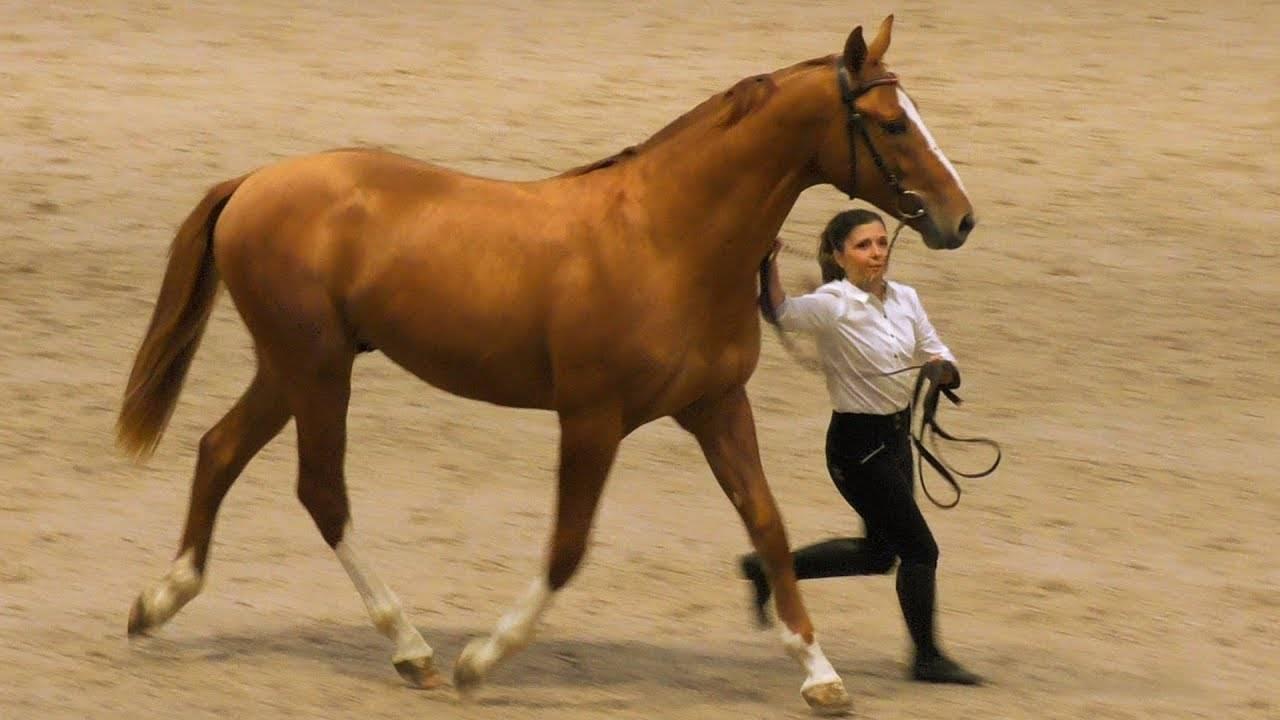 Особенности донской породы лошадей 2020
