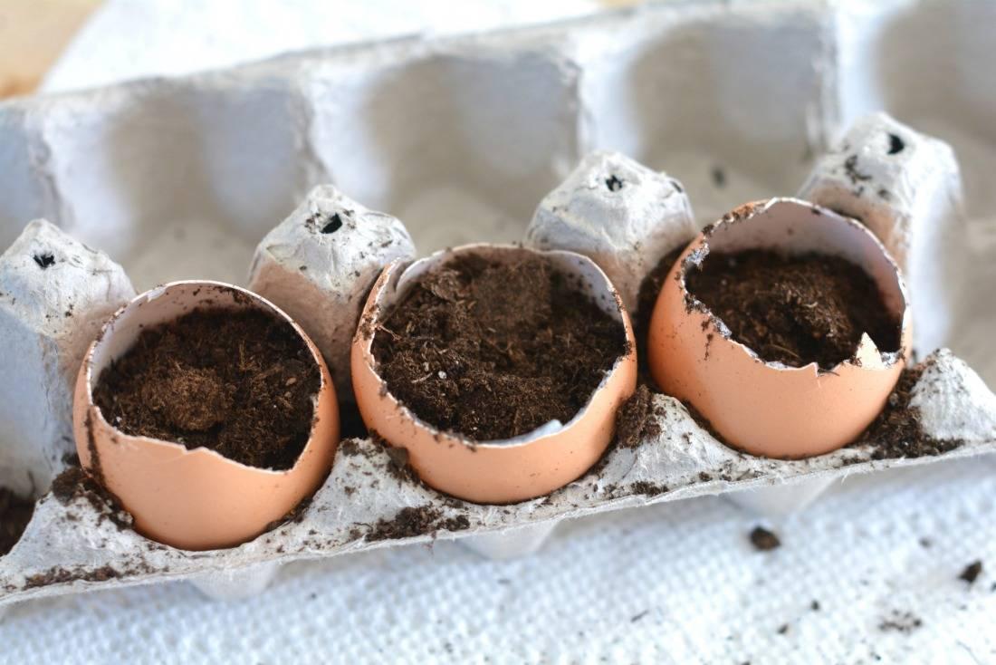 Применение яичной скорлупы как удобрения для растений на огороде и в саду