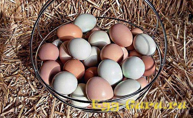 Яйца цесарки - польза и вред, как готовить цесариные яйца?
