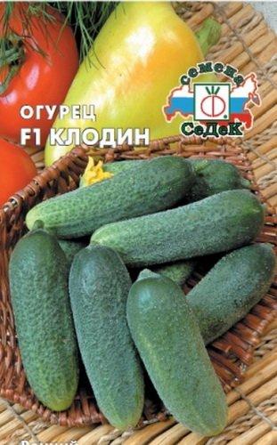 Описание сорта огурцов клодин f1 и особенности выращивания