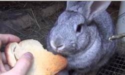 Кормление и откорм кроликов: как составить правильный рацион