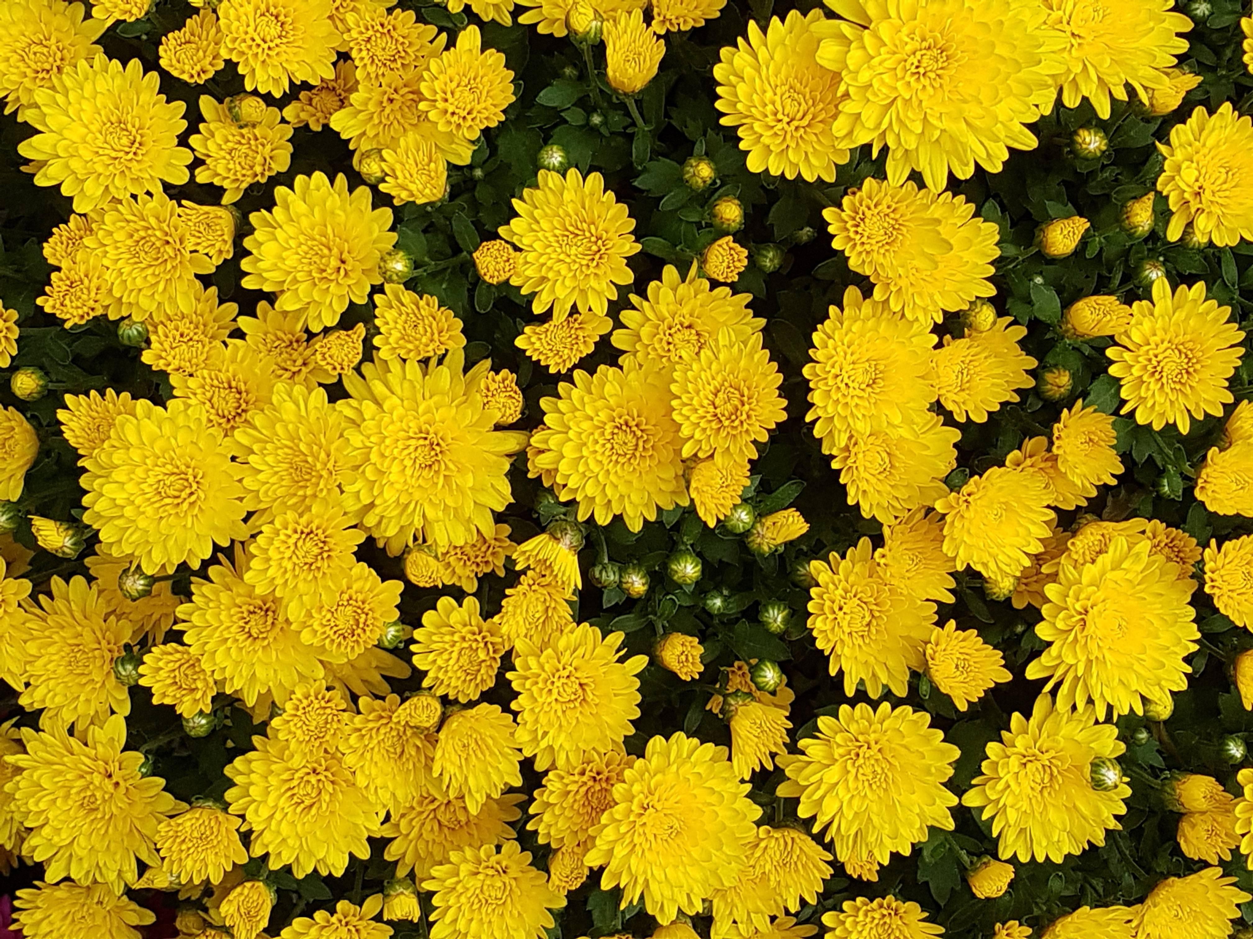 Низкорослые цветы: 155 фото видов, особенности посадки и правила применения для озеленения территории