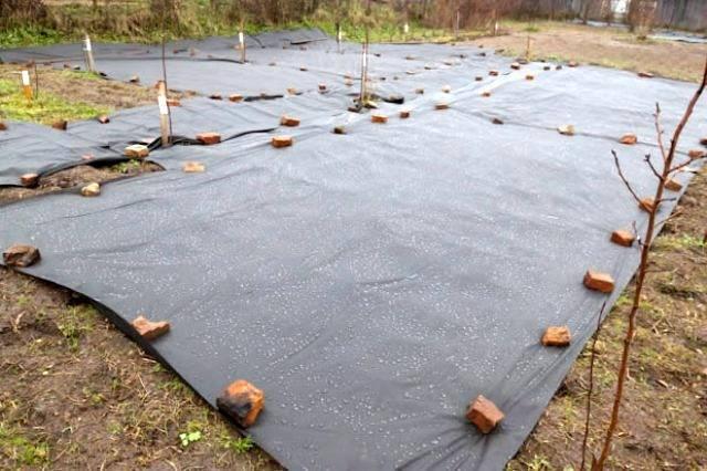 Как избавиться от малины на садовом участке народные средства?